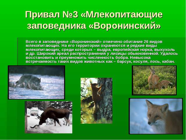 Привал №3 «Млекопитающие заповедника «Воронинский» Всего в заповеднике «Ворон...