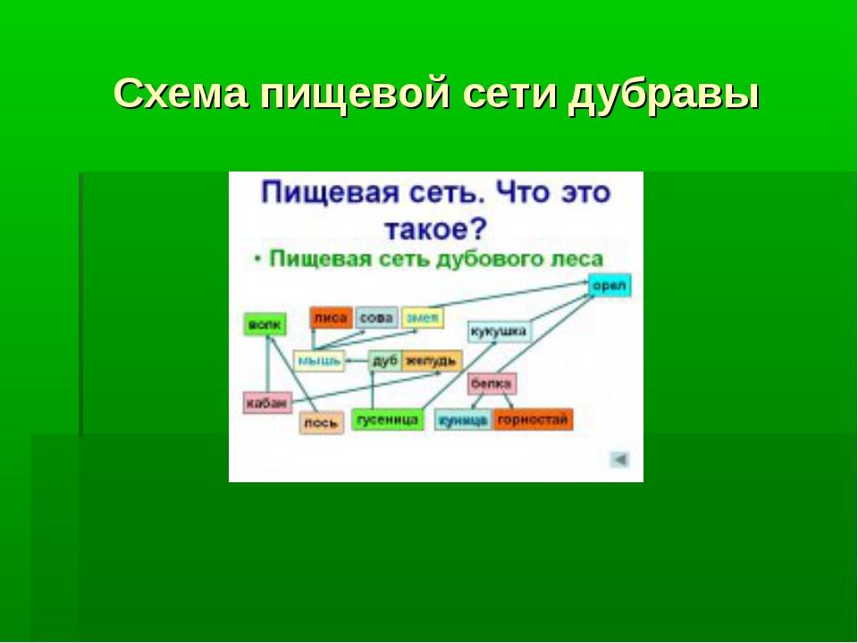 Схема пищевой сети дубравы