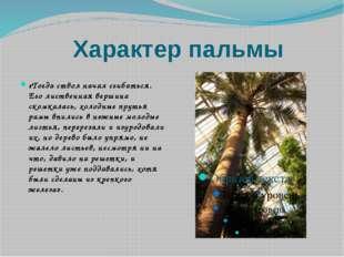 Характер пальмы «Тогда ствол начал сгибаться. Его лиственная вершина скомкала