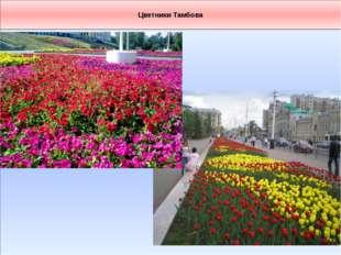 Цветники Тамбова