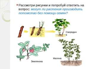 Рассмотри рисунки и попробуй ответить на вопрос: могут ли растения производит