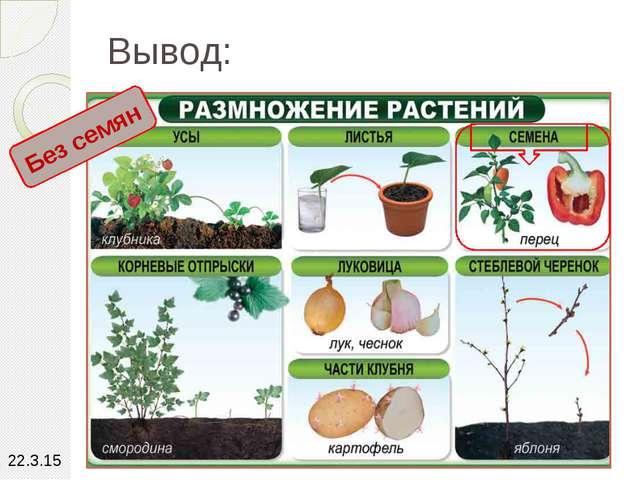 Вывод: Без семян