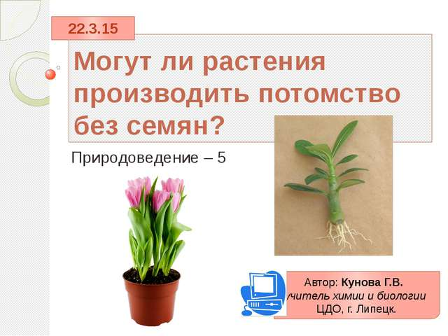 Могут ли растения производить потомство без семян? Природоведение – 5 Автор:...