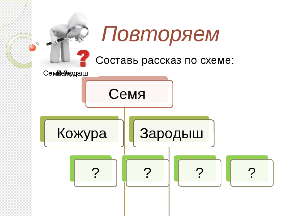 Повторяем Составь рассказ по схеме: