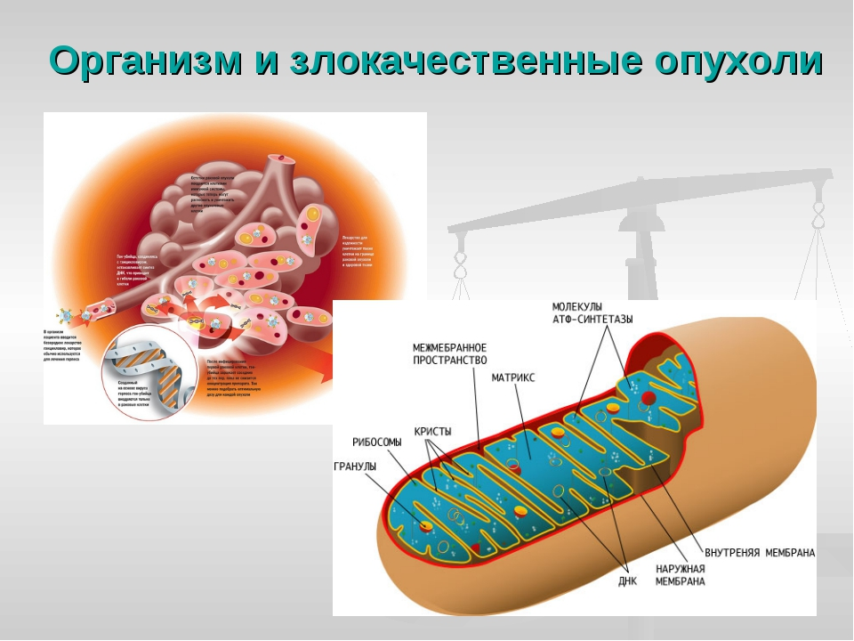 Организм и злокачественные опухоли