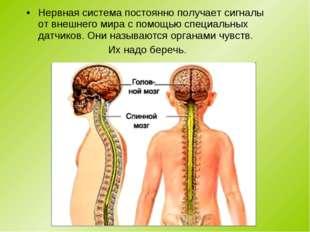 Нервная система постоянно получает сигналы от внешнего мира с помощью специал