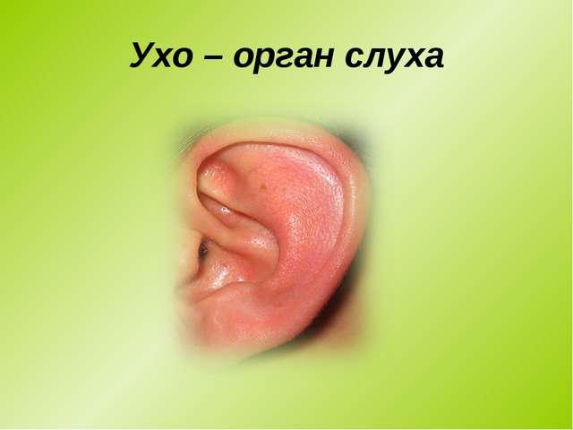 Ухо – орган слуха