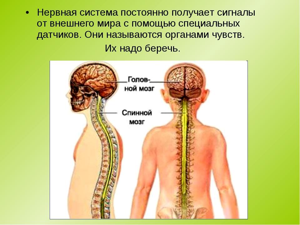 Нервная система постоянно получает сигналы от внешнего мира с помощью специал...
