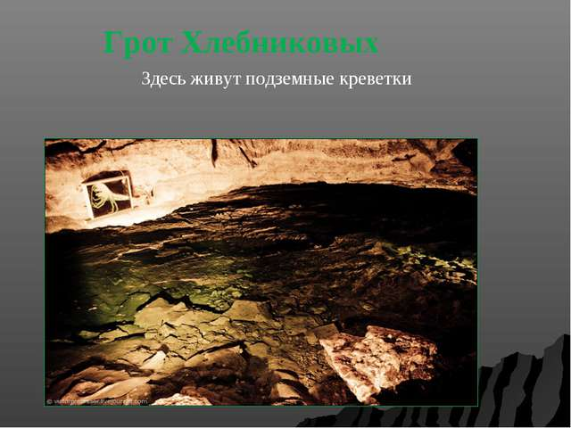 Грот Хлебниковых Здесь живут подземные креветки