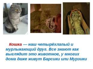 Кошка— наш четырёхлапый и мурлыкающий друг. Все знают как выглядит это живо