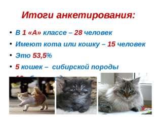 Итоги анкетирования: В 1 «А» классе – 28 человек Имеют кота или кошку – 15 че