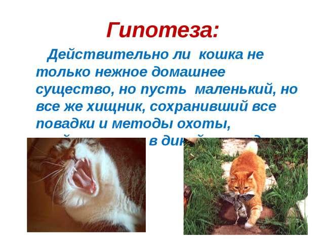 Гипотеза: Действительно ли кошка не только нежное домашнее существо, но пусть...