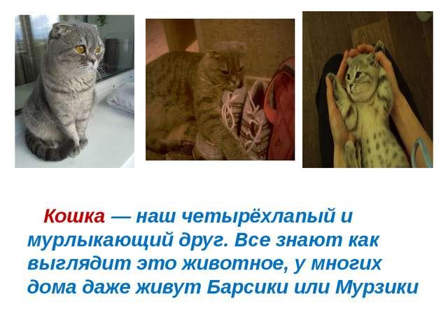 Кошка— наш четырёхлапый и мурлыкающий друг. Все знают как выглядит это живо...