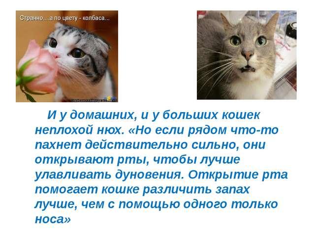 И у домашних, и у больших кошек неплохой нюх. «Но если рядом что-то пахнет д...