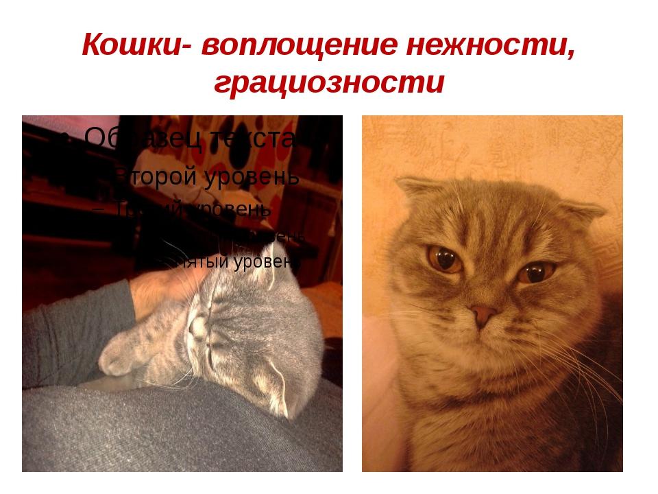 Кошки- воплощение нежности, грациозности
