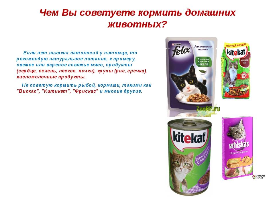 Чем Вы советуете кормить домашних животных? Если нет никаких патологий у пито...