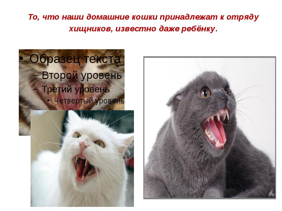 То, чтонаши домашние кошки принадлежат к отряду хищников, известно даже ребё...