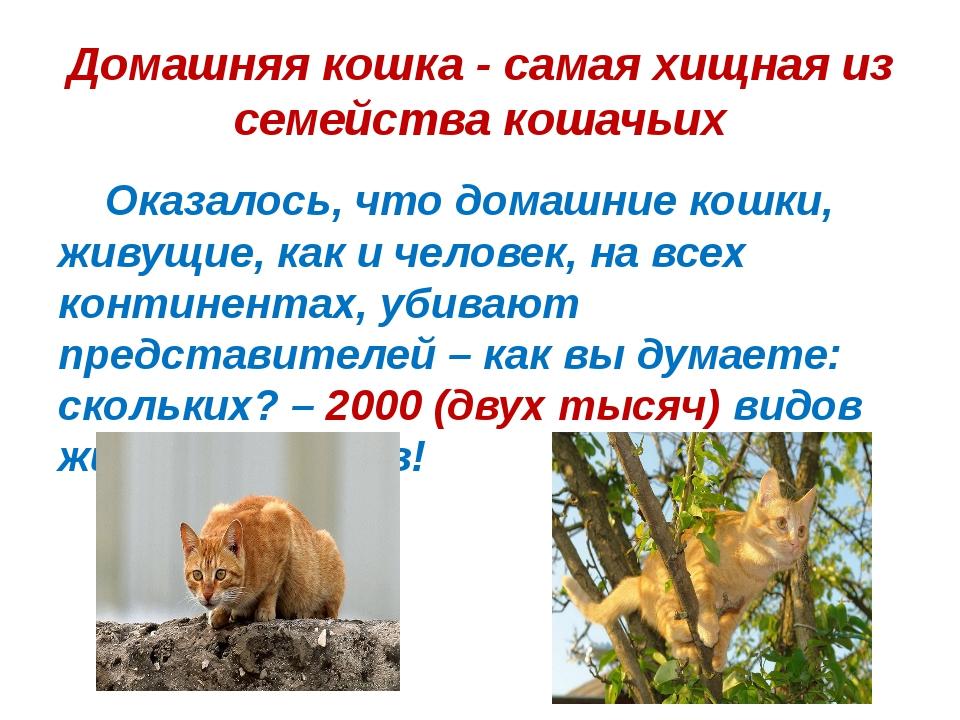 Домашняя кошка - самая хищная из семейства кошачьих Оказалось, что домашние к...