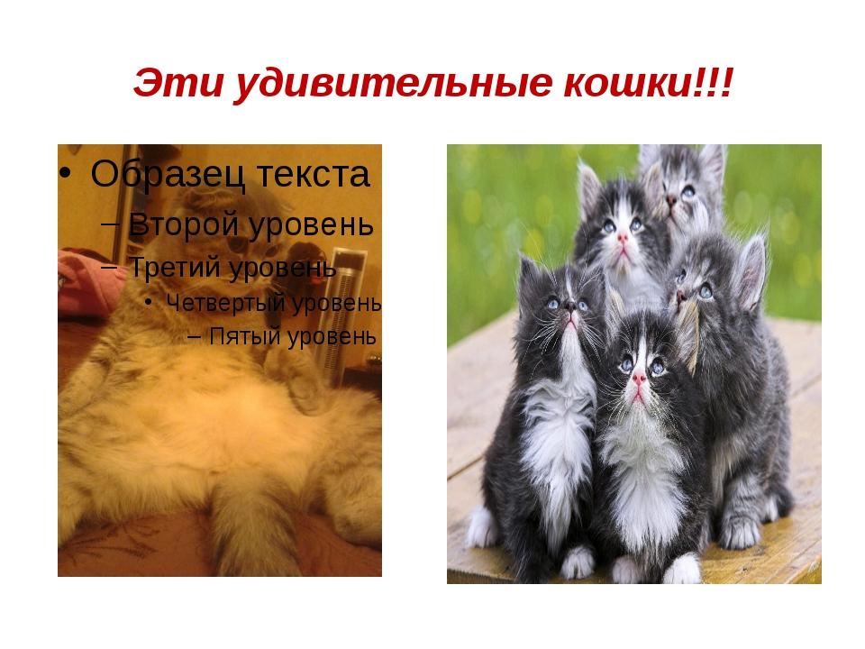 Эти удивительные кошки!!!