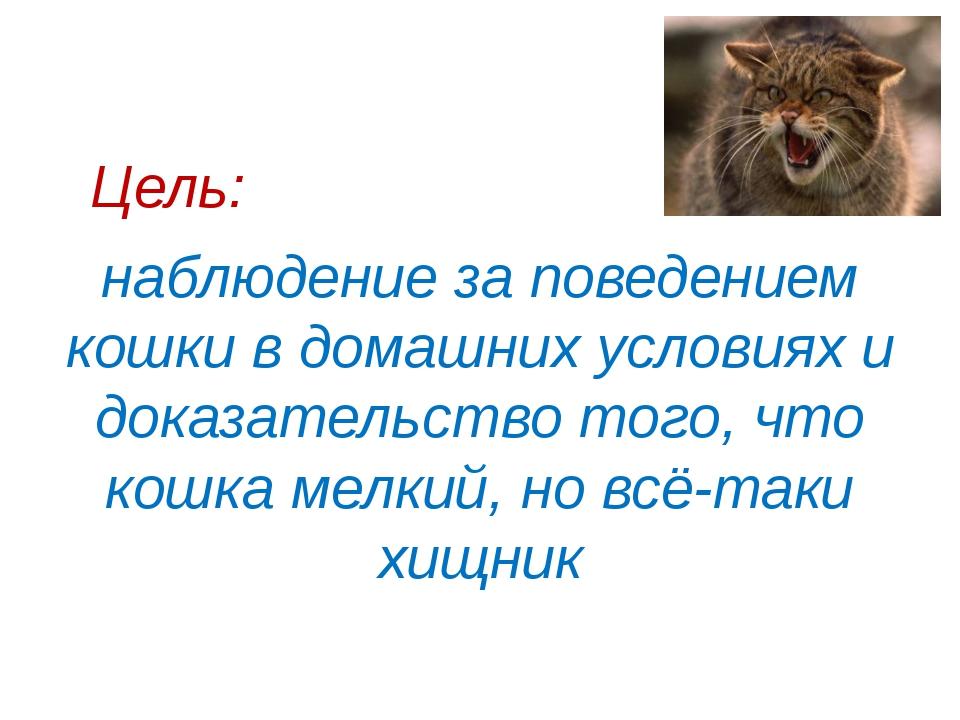 Цель: наблюдение за поведением кошки в домашних условиях и доказательство то...