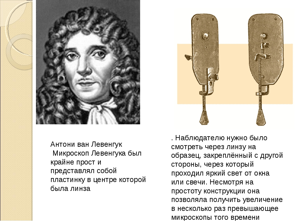 Антони ван Левенгук Микроскоп Левенгука был крайне прост и представлял собой...