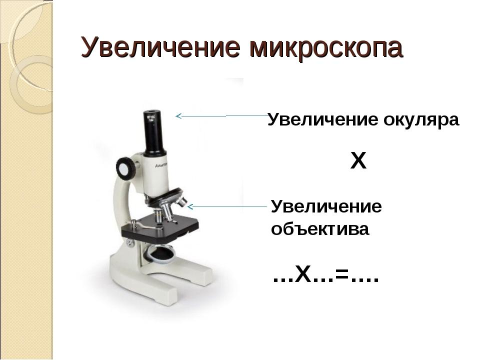 Увеличение микроскопа Увеличение окуляра Х Увеличение объектива …Х…=….