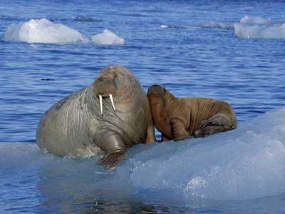 C:\Documents and Settings\Администратор\Рабочий стол\arctic-ocean3.jpg