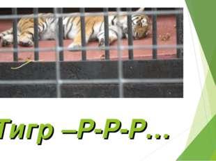 Тигр –Р-Р-Р…