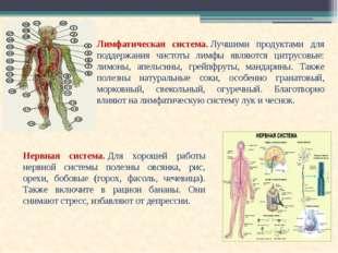 Лимфатическая система.Лучшими продуктами для поддержания чистоты лимфы являю