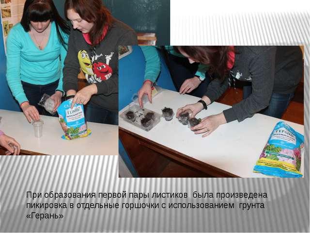 При образования первой пары листиков была произведена пикировка в отдельные г...