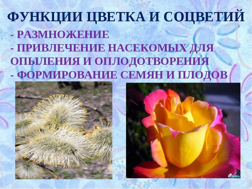 ФУНКЦИИ ЦВЕТКА И СОЦВЕТИЙ - РАЗМНОЖЕНИЕ - ПРИВЛЕЧЕНИЕ НАСЕКОМЫХ ДЛЯ ОПЫЛЕНИЯ...