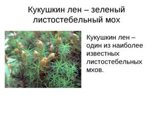 Кукушкин лен – зеленый листостебельный мох Кукушкин лен – один из наиболее из