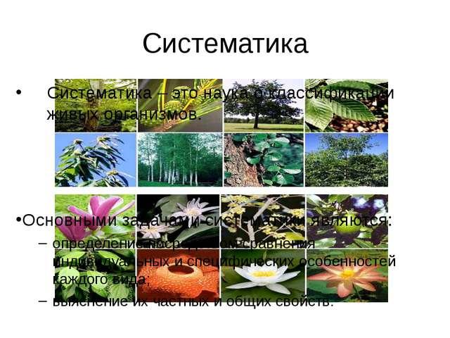 Систематика Систематика – это наука о классификации живых организмов. Основны...