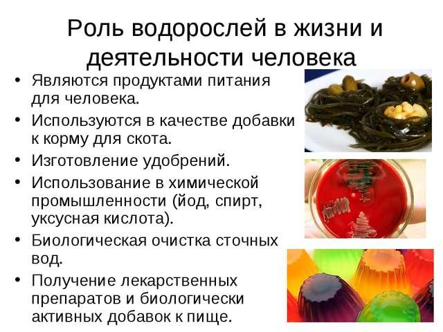 Роль водорослей в жизни и деятельности человека Являются продуктами питания...