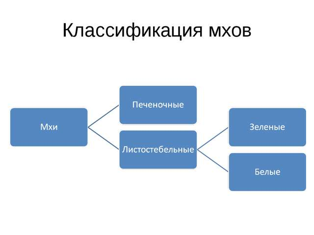 Классификация мхов