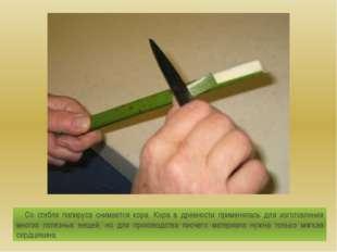 Со стебля папируса снимается кора. Кора в древности применялась для изготовле