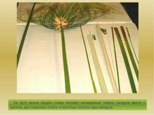 На фото можно увидеть (слева направо) неочищенный стебель папируса вместе с