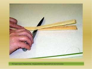 Когда кора счищенна, сердцевина нарезается на полоски.