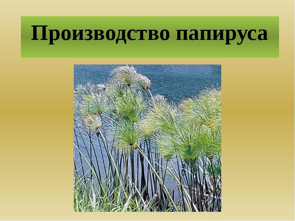 Производство папируса Две с половиной тысячи лет назад отрасль производства п...
