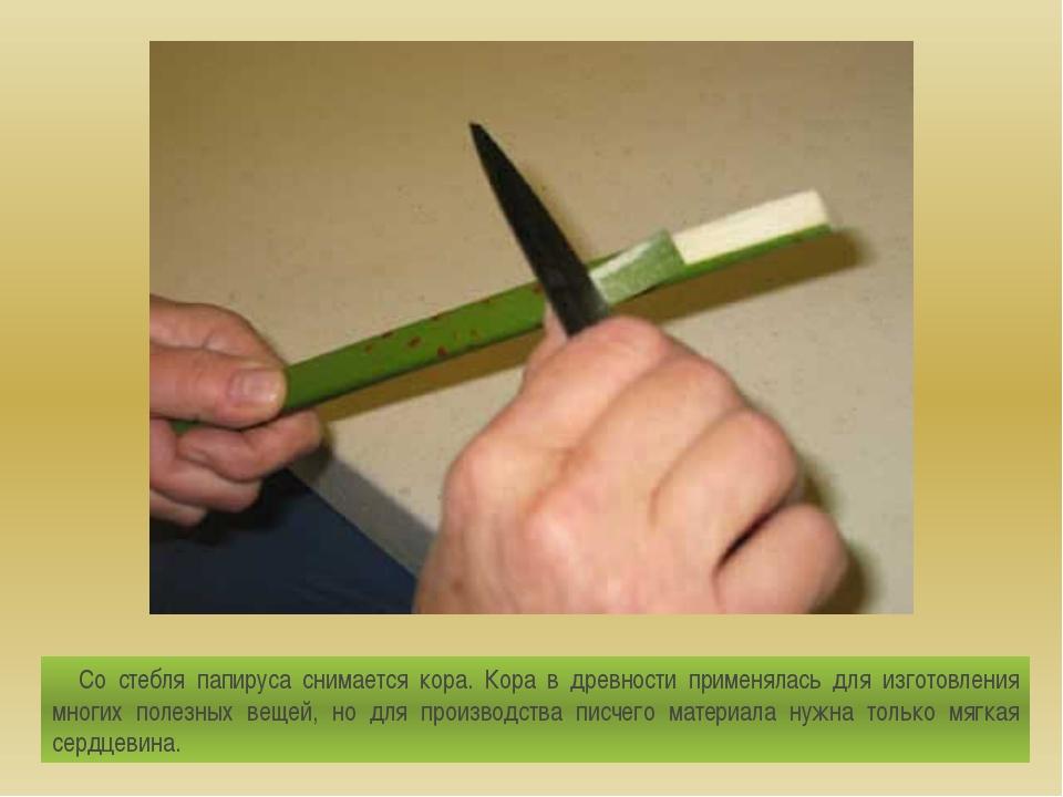 Со стебля папируса снимается кора. Кора в древности применялась для изготовле...