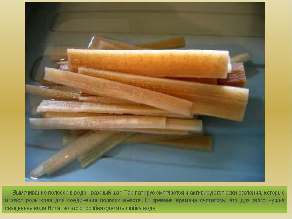 Вымачивание полосок в воде - важный шаг. Так папирус смягчается и активируют...