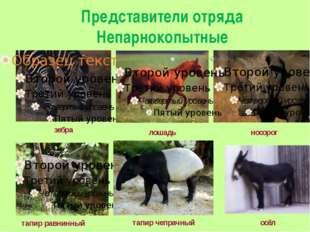 Представители отряда Непарнокопытные тапир чепрачный тапир равнинный осёл зеб
