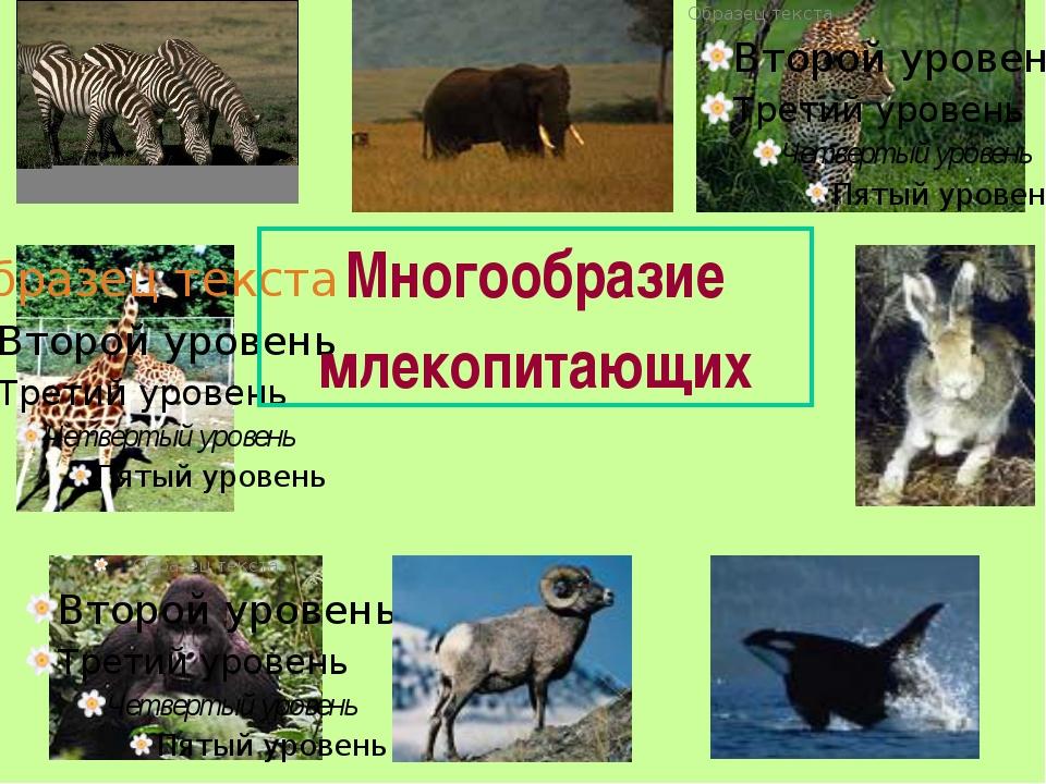 Многообразие млекопитающих