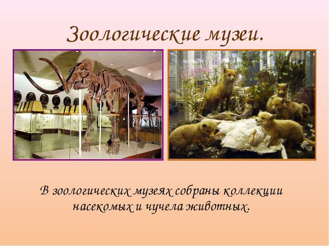 Зоологические музеи. В зоологических музеях собраны коллекции насекомых и чу...