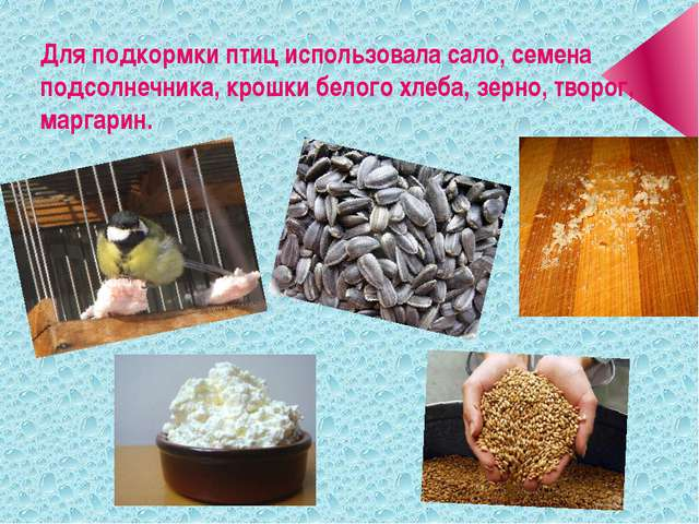 Для подкормки птиц использовала сало, семена подсолнечника, крошки белого хле...