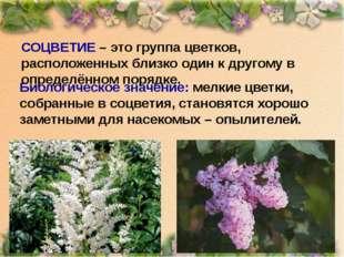 СОЦВЕТИЕ – это группа цветков, расположенных близко один к другому в определё