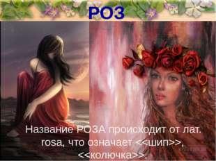 РОЗА Название РОЗА происходит от лат. rоsа, что означает , .