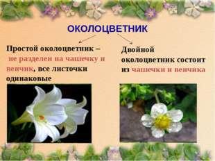 Простой околоцветник – не разделен на чашечку и венчик, все листочки одинаков