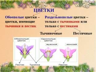 ЦВЕТКИ Обоеполые цветки – цветки, имеющие тычинки и пестик Раздельнополые цве