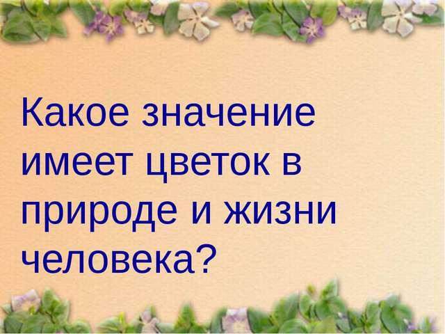 Какое значение имеет цветок в природе и жизни человека?